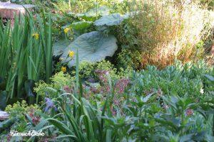 Strauchliebe Naturgärten