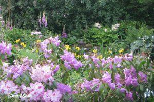 Strauchliebe Naturgärten Landschaftsgaertner Erlangen Höchstadt verwunschen naturnah romantisch